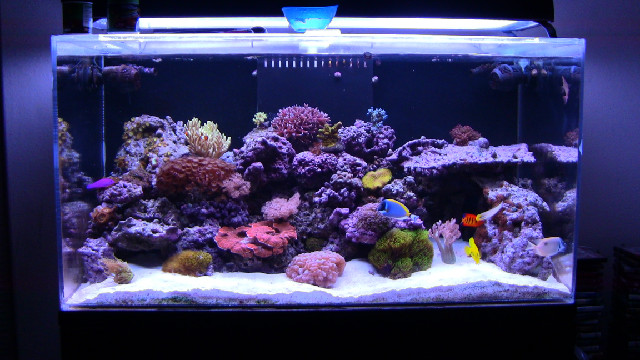 Types of Saltwater Aquariums - Mad Hatters Reef