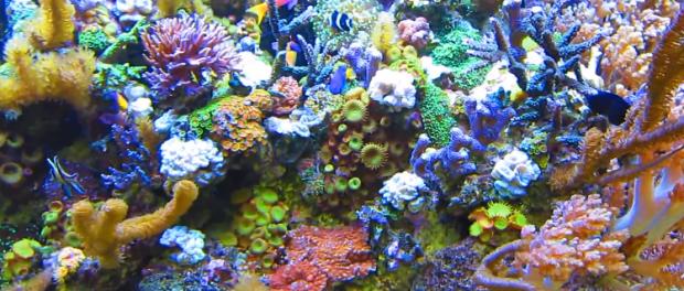 Saltwater aquarium 101 starting a saltwater aquarium 101 for Starting a saltwater fish tank