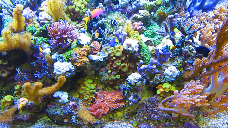Biological Filtration and Saltwater Aquariums