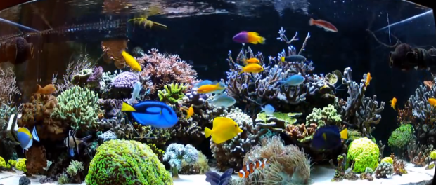 Top 10 Saltwater Aquarium Fish for Beginners - Mad Hatters Reef