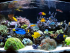 Saltwater Aquarium Fish for Beginners