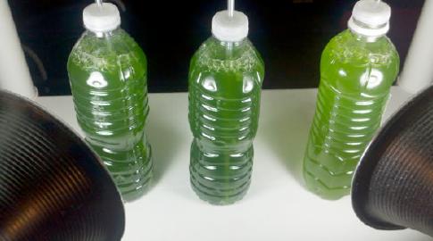 Culturing phytoplankton