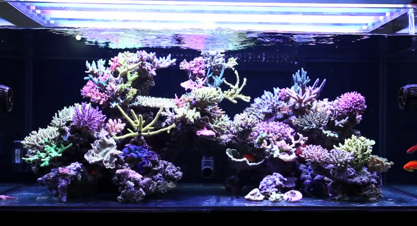 Saltwater aquarium on a budget mad hatter 39 s reef for Marine fish tanks