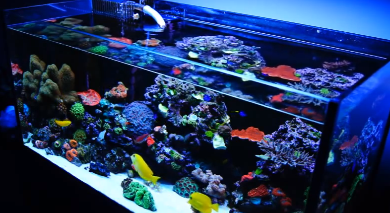 Mad hatter 39 s reef saltwater aquarium care and information for Marine fish tanks