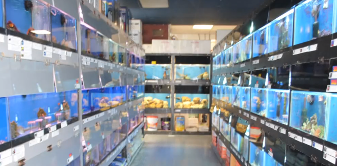 Selecting fish for your saltwater aquarium