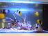 Fish Only Aquarium
