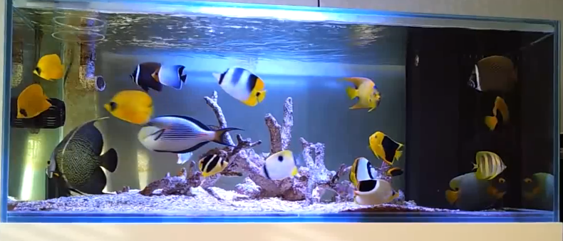 ... Saltwater Fish Only With Live Rock Aquarium Marine Fish Reef Tank R048