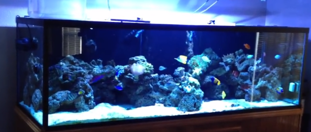 Types of saltwater aquariums mad hatter 39 s reef for Marine fish tanks