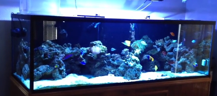 Types of saltwater aquariums mad hatter 39 s reef Types of fish aquarium