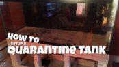 How to setup a quarantine tank