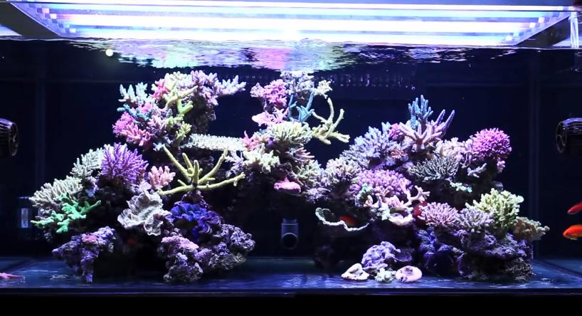 Types of Saltwater Aquariums - Mad Hatters Reef