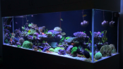 20 ways to Improve Aquarium Husbandry