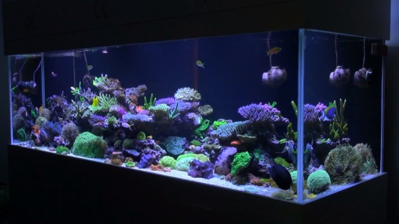 Mad Hatter S Reef Saltwater Tank Information And Care