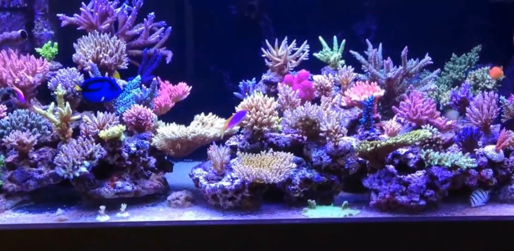 How to mix saltwater mad hatter 39 s reef for Above water fish tank