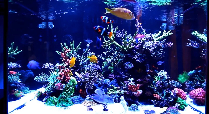 How to plan a saltwater aquarium setup mad hatter 39 s reef for Freshwater fish tank setup