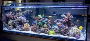 Saltwater aquarium cost