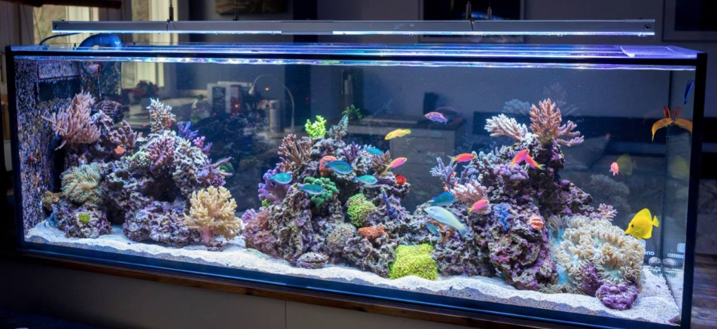 The truth about saltwater aquarium cost mad hatter 39 s reef for Marine fish tanks
