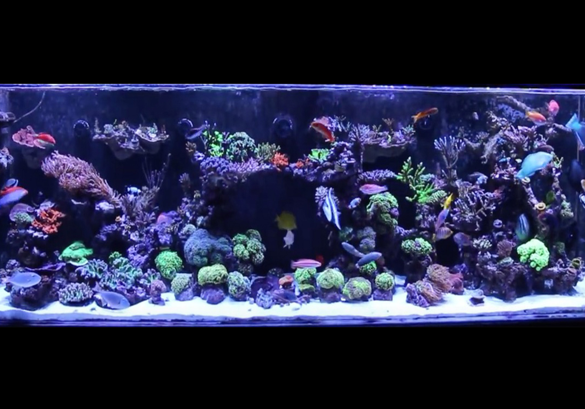 Saltwater aquarium for beginners mad hatter 39 s reef for Marine fish tanks