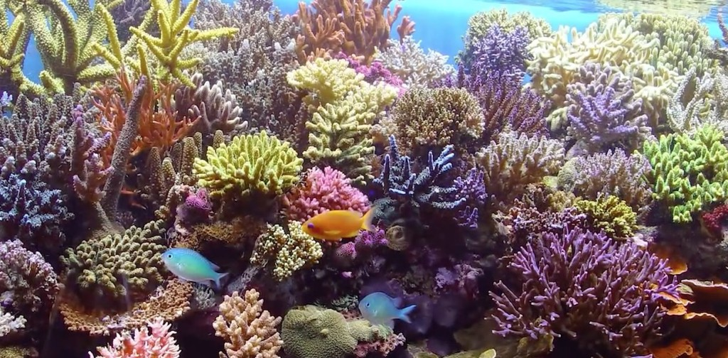 Saltwater aquarium tips for beginners mad hatter 39 s reef for Best saltwater fish for beginners