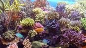 Saltwater aquarium tips