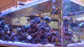 Ammonia in saltwater aquariums