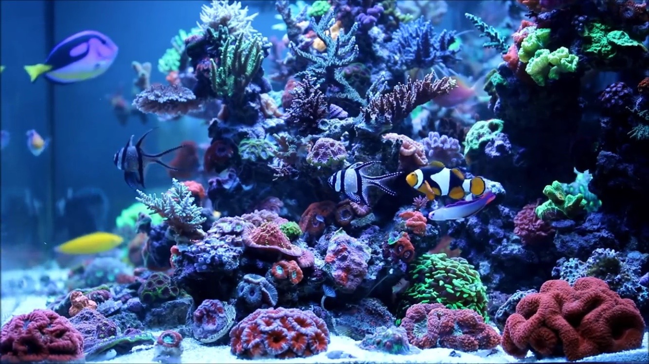 Saltwater aquarium - Chemical Filtration And Saltwater Aquariums