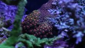 Zoanthids Care