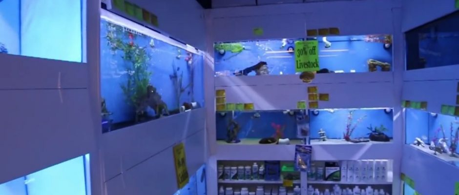 Mad hatter 39 s reef saltwater aquarium care and information for Salt water fish store