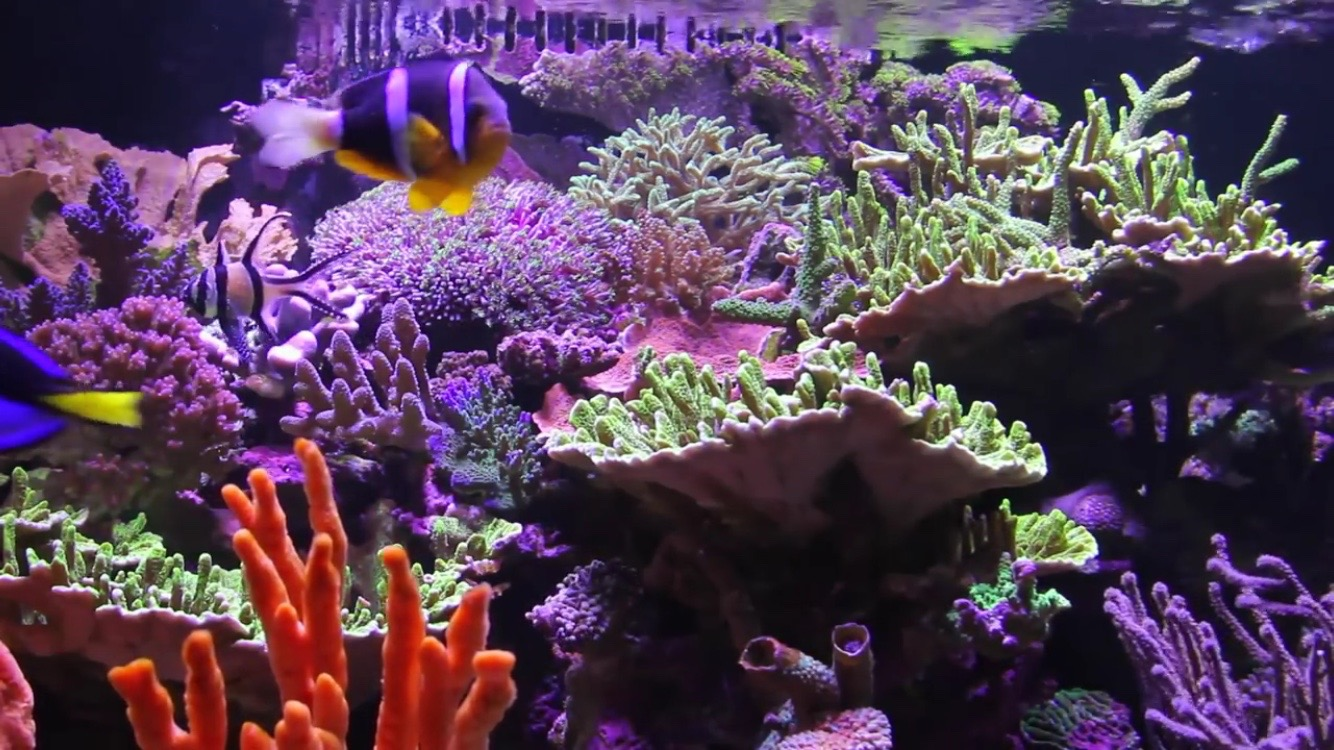 Saltwater aquarium - What S