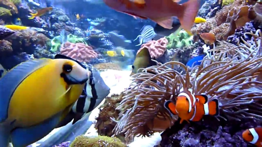 8 steps to setting up a saltwater aquarium mad hatter 39 s reef for How to saltwater fish