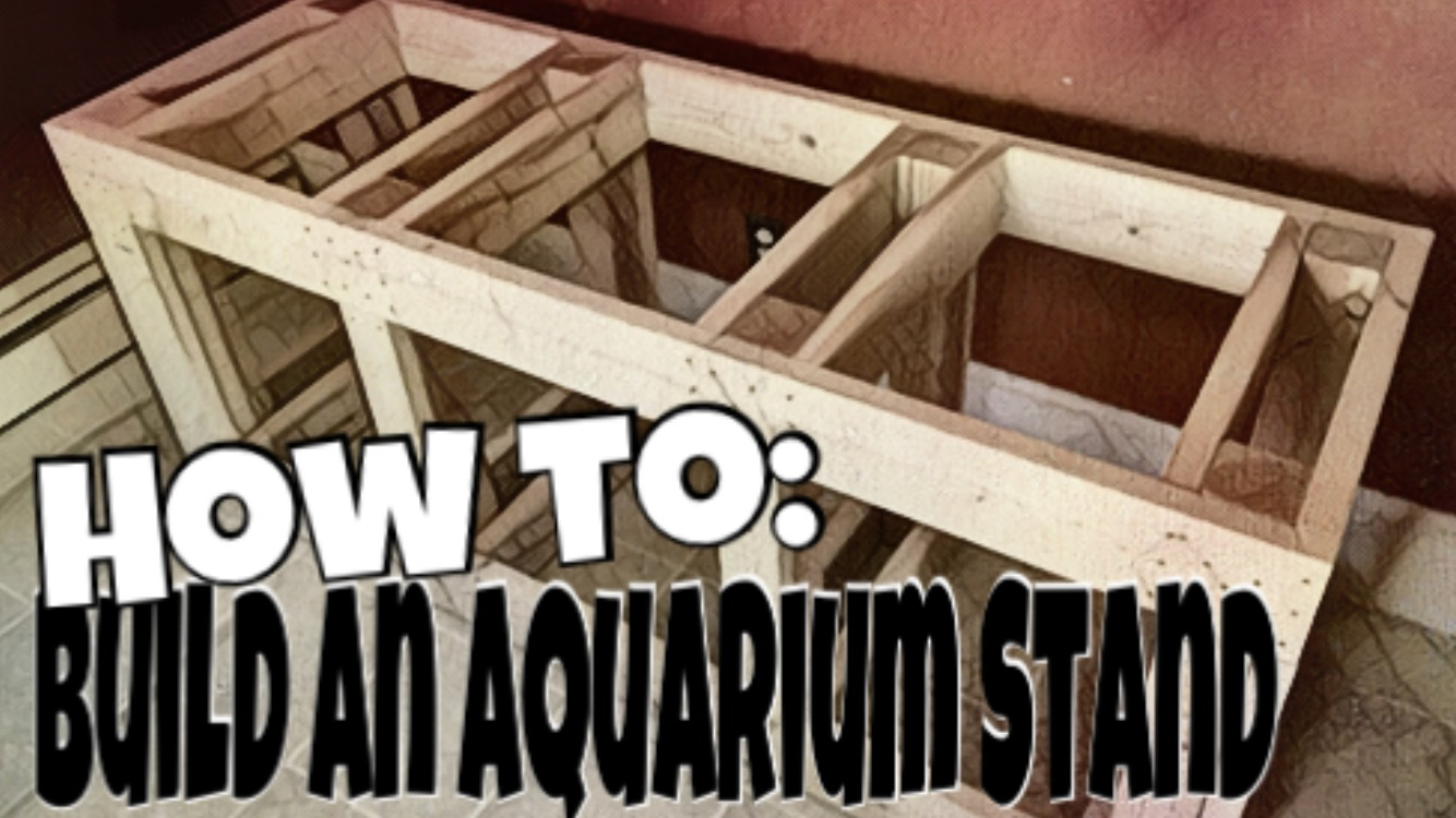 For People Looking To Save Alittle Money And Still Have A Beautiful R Aquarium Today We Are Talking About How Build An Stand