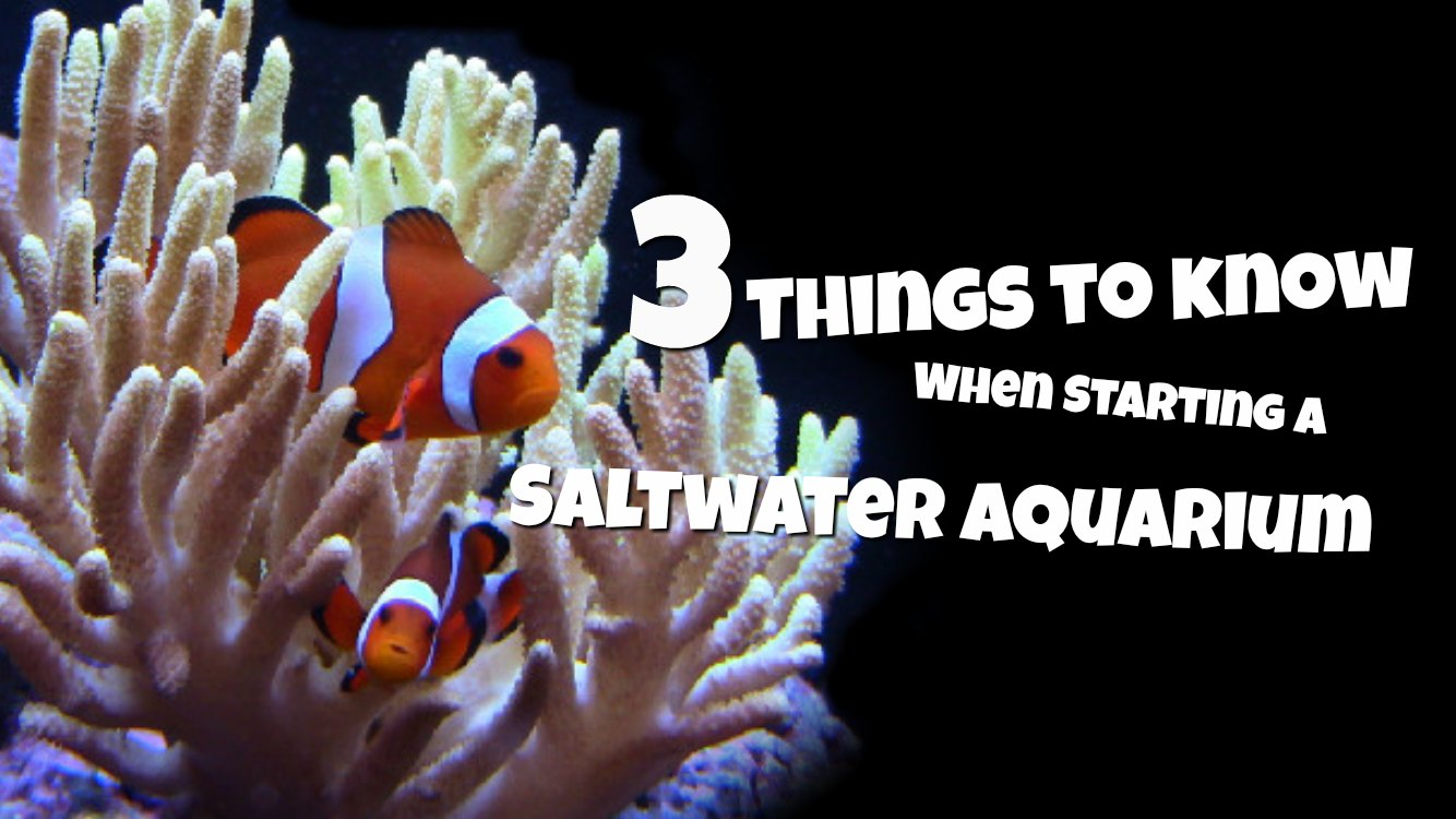 Starting a Saltwater Aquarium