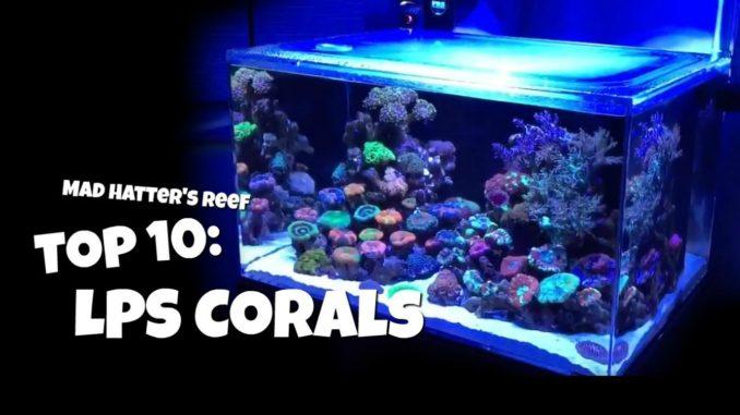 Top 10 LPS Corals - Mad Hatter's Reef
