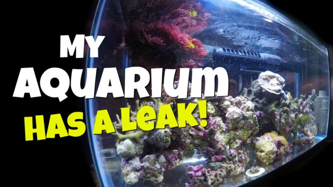 My aquarium has a leak mad hatter 39 s reef for How to fix a leaking fish tank
