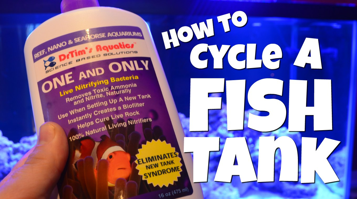 How to cycle a fish tank mad hatter 39 s reef for How to cycle a fish tank