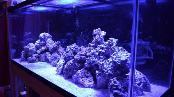 In This Video, I Show How To Aquascape A Saltwater Aquarium. This Video  Demonstrates How To Effectively Aquascape An Aquarium. Be Sure To Subscribe  And Come ...