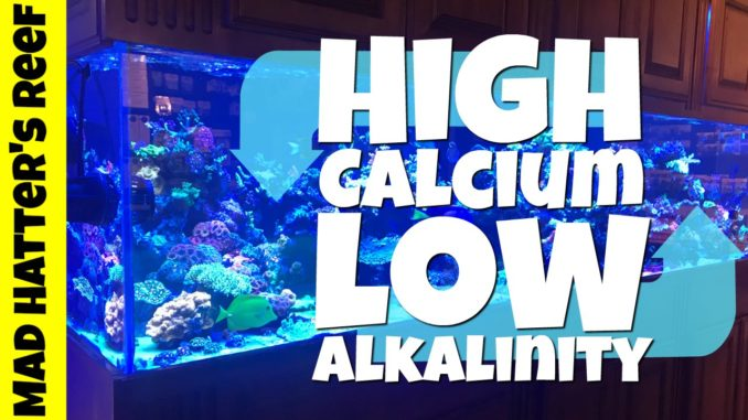 calcium and alkalinity relationship